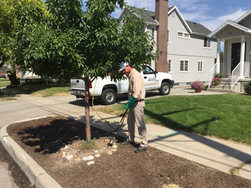 A man demonstrating professional tree care in Daybreak, UT