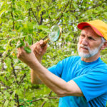 preventing tree pests diseases