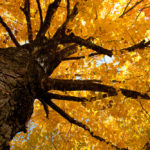 fall tree care preventing disease