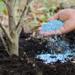 benefits spring tree fertilization