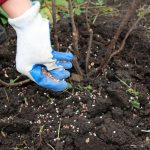 Fertilize Trees and Shrubs